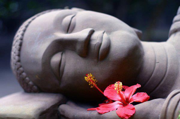 bouddha-fleur